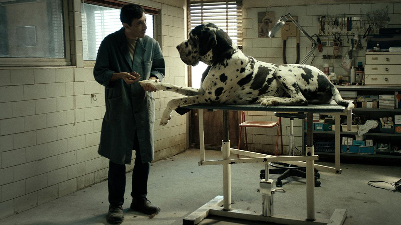 Dogman (2018) image