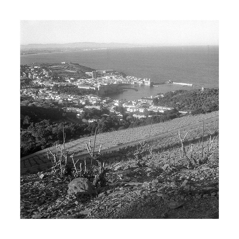 scan Collioure Vigne