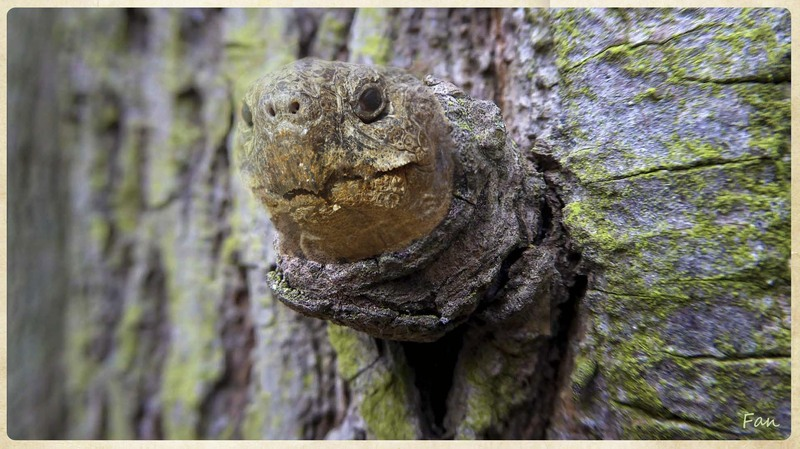 TORTUE arbre