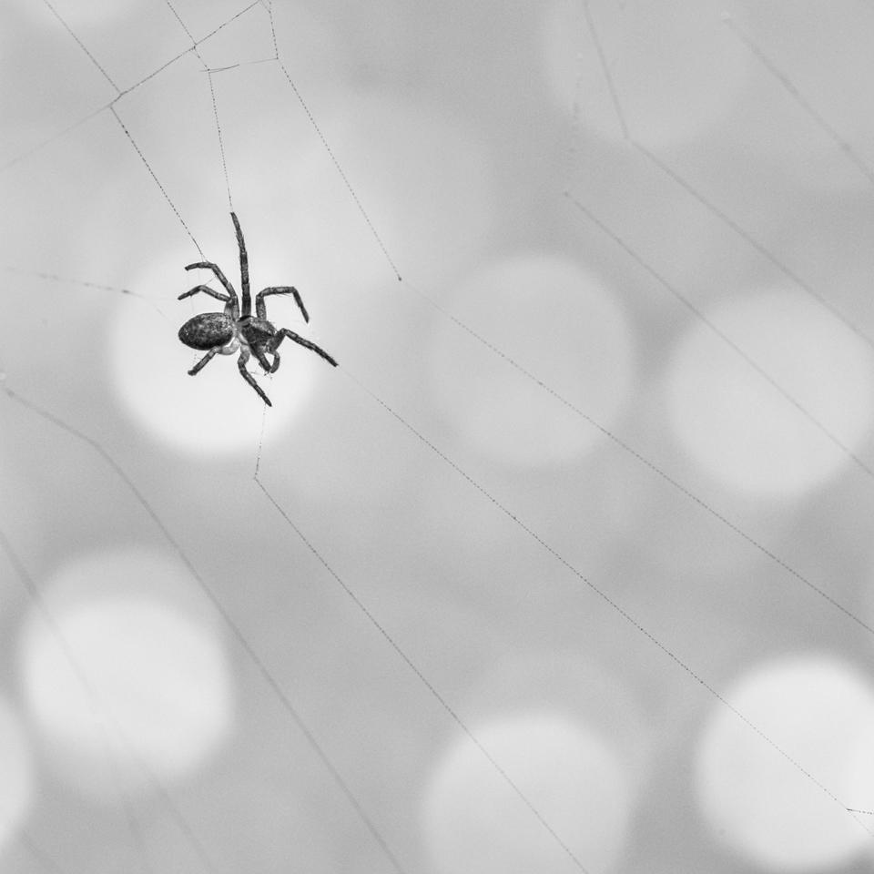 L'araignée 190224071013808478