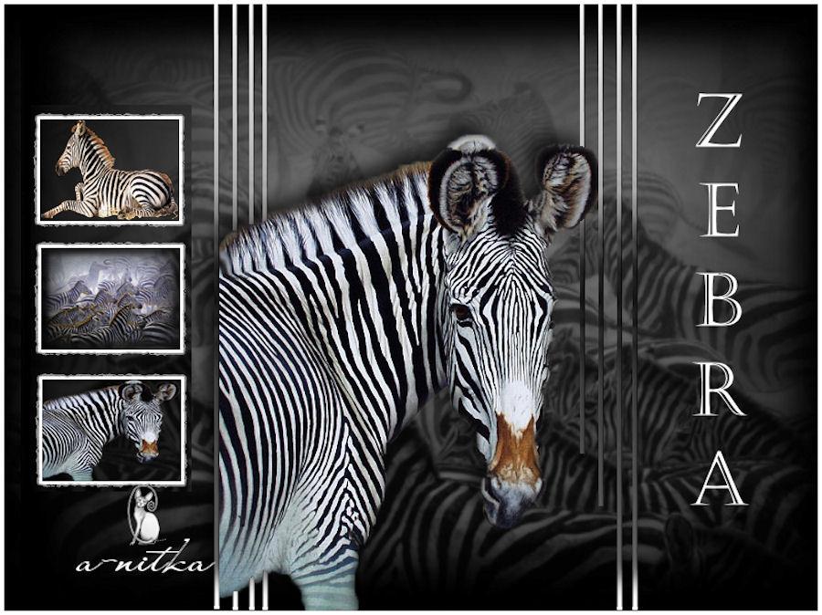 zebra 900