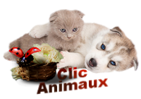 Clic animaux - Page 7 190307055457676057