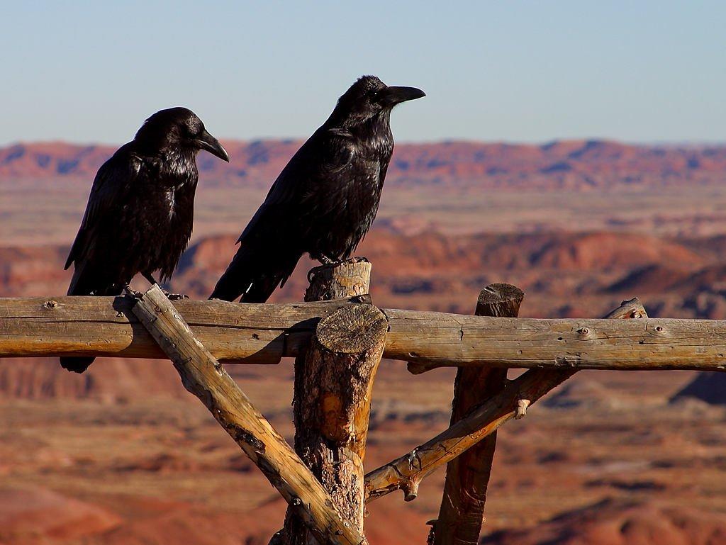 dig_birds_fence_wood_fence_nature_landscape_black-1158788.jpg!d