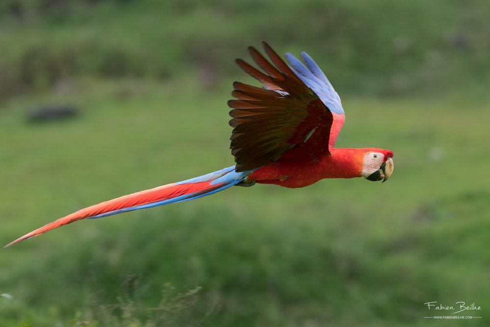 Oiseau-vol-mouvement-previsible