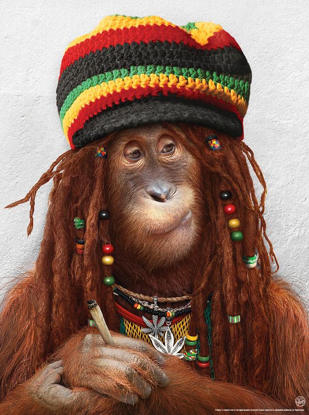 Singe Reggae