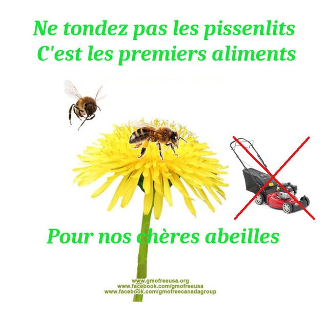 Petit aparté sur la mortalité des abeilles , bilan des alertes - Page 4 190315022407366383