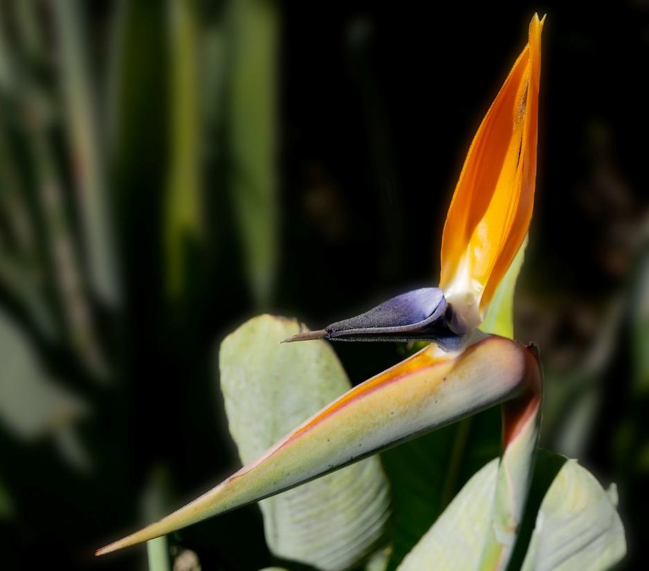 Le bel oiseau de mon jardin 190315072901892878