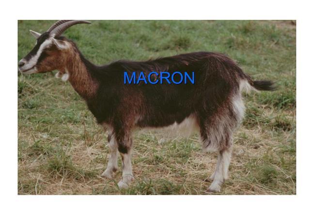 IL va faire des miracles (Macron inside) - Page 20 19032806131761570