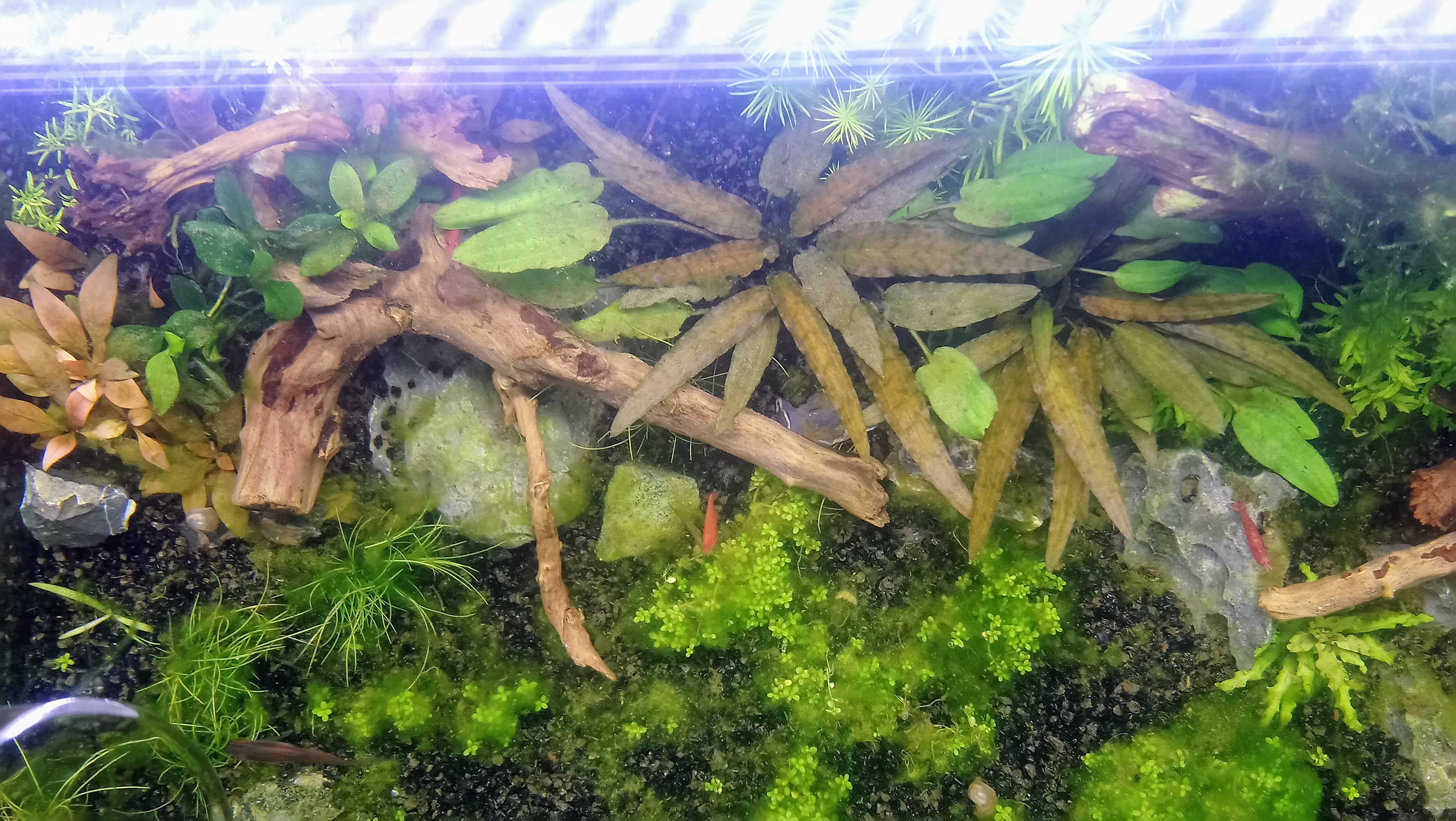 54L Dernière crise d'aquariophilite  190328125119834095