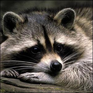 Etude de la faune des Mycorocs 190401010558392880