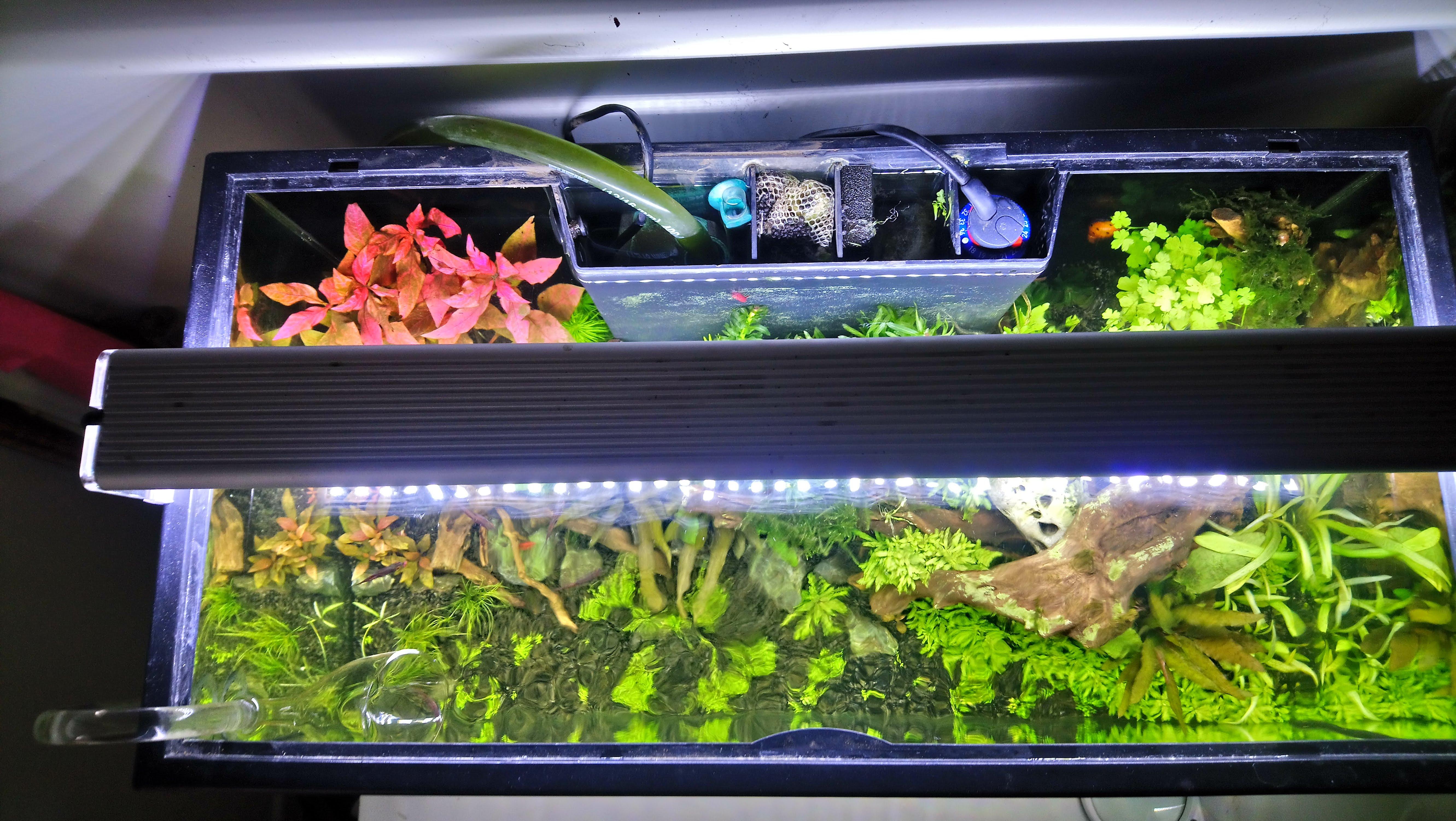 Demarrage aquarium / Problème d'algues 190403053001667673