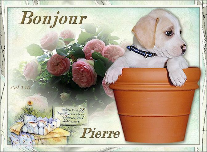 Bonjours/bonsoirs d'AVRIL 190408044806555208