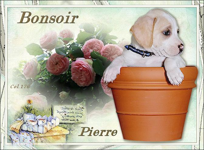 Bonjours/bonsoirs d'AVRIL 190408044854175358