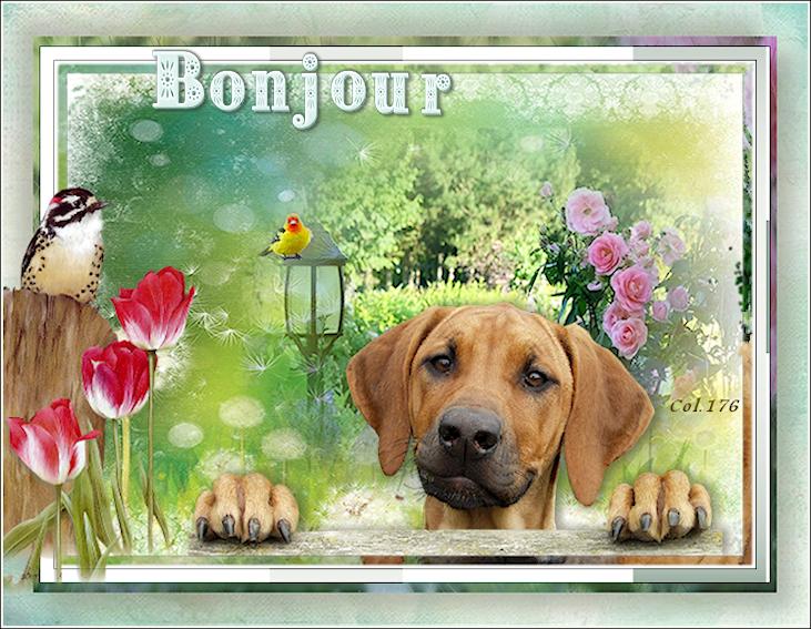 Bonjours/bonsoirs d'AVRIL 190408051419411338