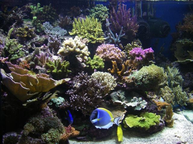 Plongée sur mon récif 19040904260370912