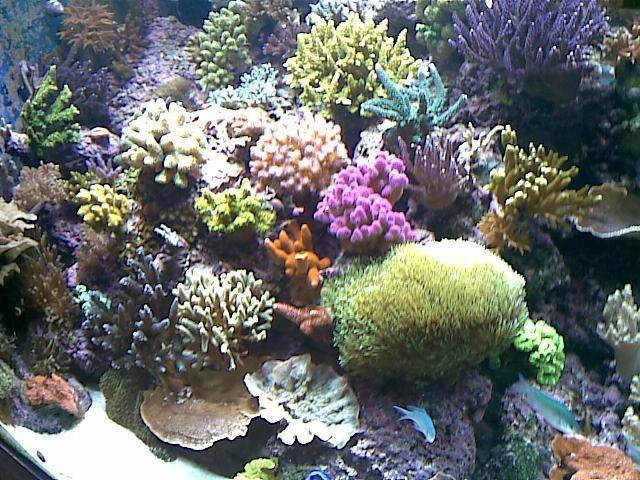 Plongée sur mon récif 190409042907681047