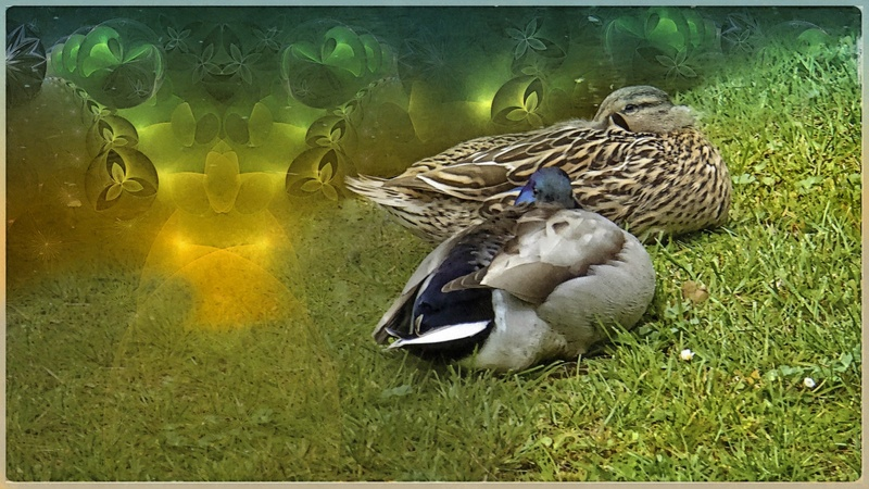 canard02_FotoSketcher3