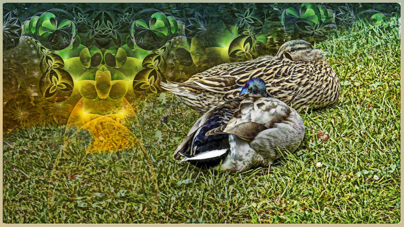 canard04finetouch