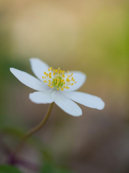 Douces fleurs des bois 19041110483342640