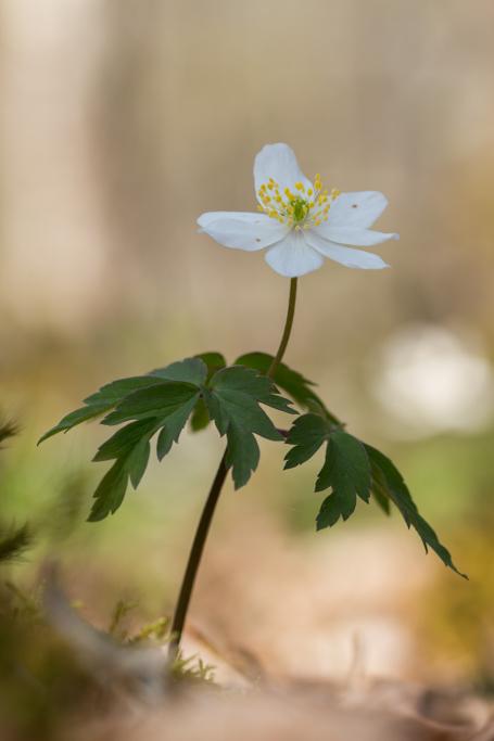 Douces fleurs des bois 190411105113878137