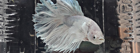 Nouvel arrivage AKOWA fishdiscount Avril 190412085224257607