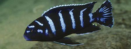Nouvel arrivage AKOWA fishdiscount Avril 190412085612113742