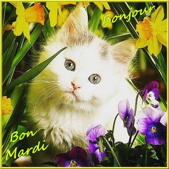 Bonjour du mois d'Avril 2019  - Page 3 190416102832435648