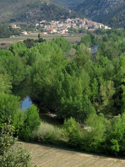 Languedoc1