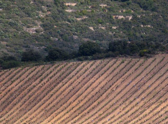 Languedoc3