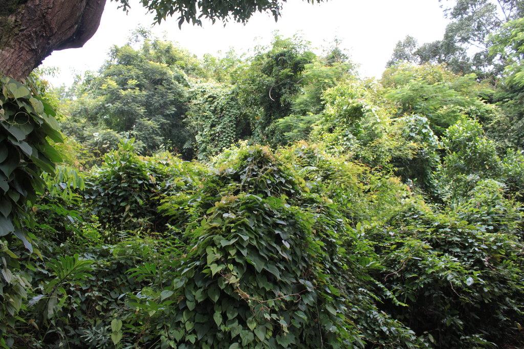 jungletunnels