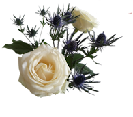 Forumactif.com : LA ROSERAIE DE TRICOTINE 190429041745804021