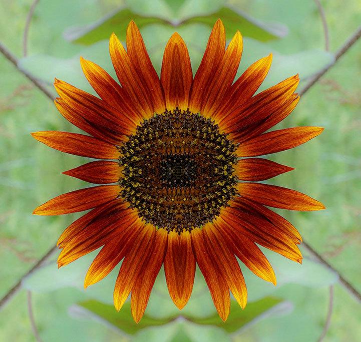 Mon jardin fleuri (mise a jour du 23.05.2019) - Page 14 190503061357418057