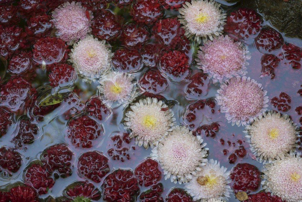 Mon jardin fleuri (mise a jour du 23.05.2019) - Page 14 19050510010414675
