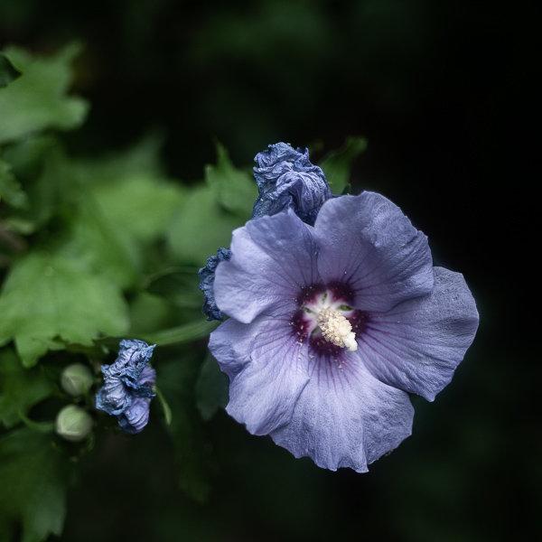 Quelques fleurs 190506043740358246