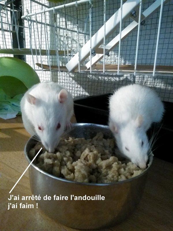 Les Ratasses-Fouinasses dans leur Palace. Partie 2 - Page 13 190510121302956970