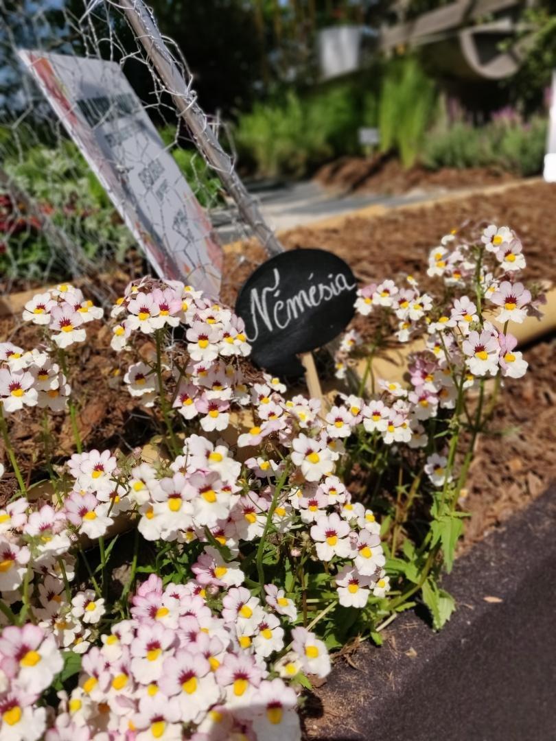 Floralies 2019-13