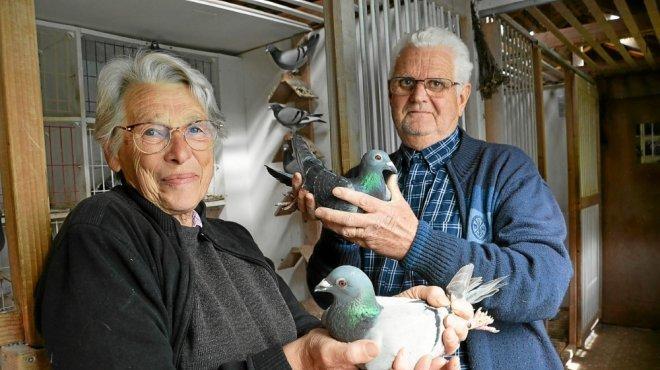 marie-et-marcel-coachs-de-pigeons-de-haut-vol-video_4582731_660x370