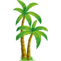 palmier37