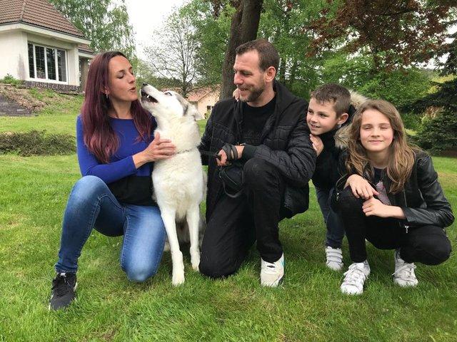 [ADOPTÉ!] Guts, Husky mâle de 8 ans, cherche bonne famille! 190603061154229070
