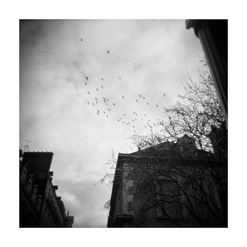 scan Vol Oiseaux holga