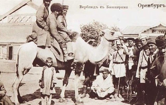 LE CHAMEAU CHEZ LES COSAQUES D'ORENBURG 190616082512161580