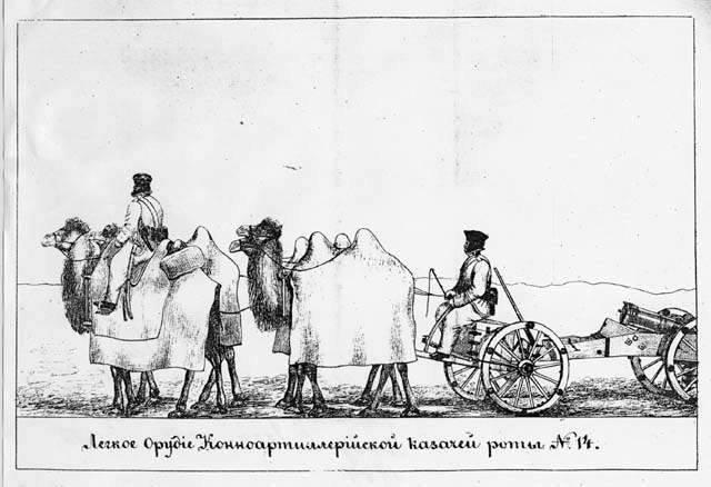 LE CHAMEAU DE BACTRIANE : ses caractéristiques, ses usages et son dressage chez les Bashkirs 190619103259168941