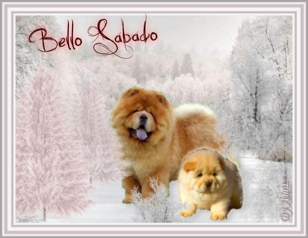 Chow Chow y su Hijo , el Perro con la Lengua Azul 190620124220277508