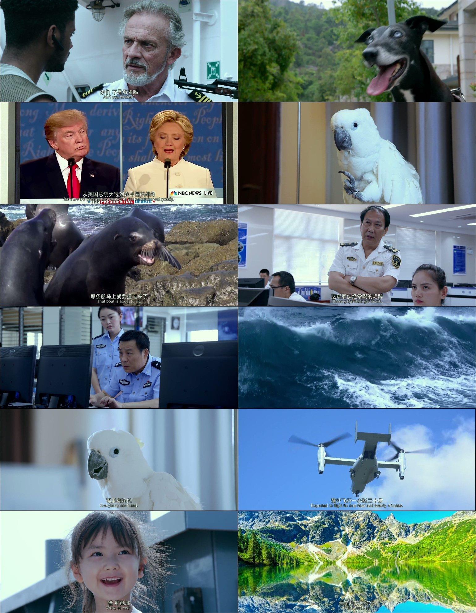 這邊是動物出擊Animal Rescue Squad.2019.HD-1080p[MKV@1.7G@多空@簡英]圖片的自定義alt信息;551402,734997,haokuku,30