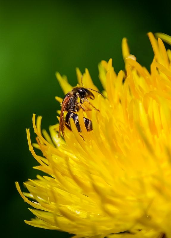 Macros/  proxi/  insectes  - Page 6 190722040052684080