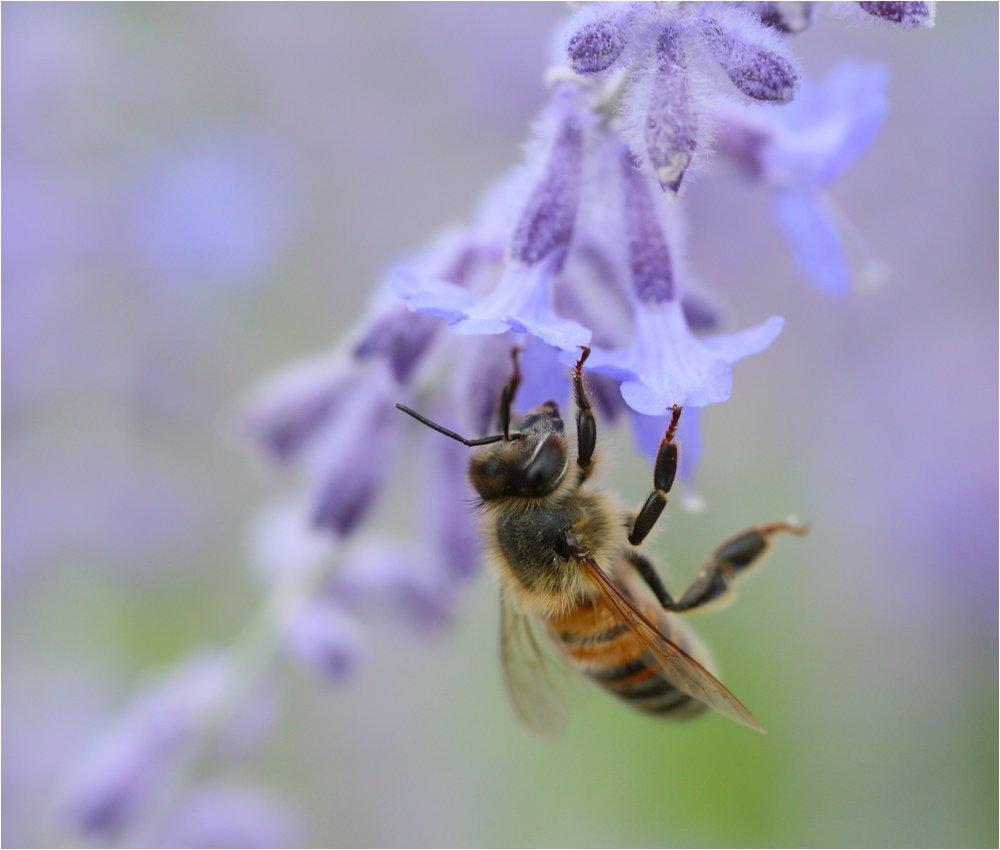 3 abeilles  190731091340197603