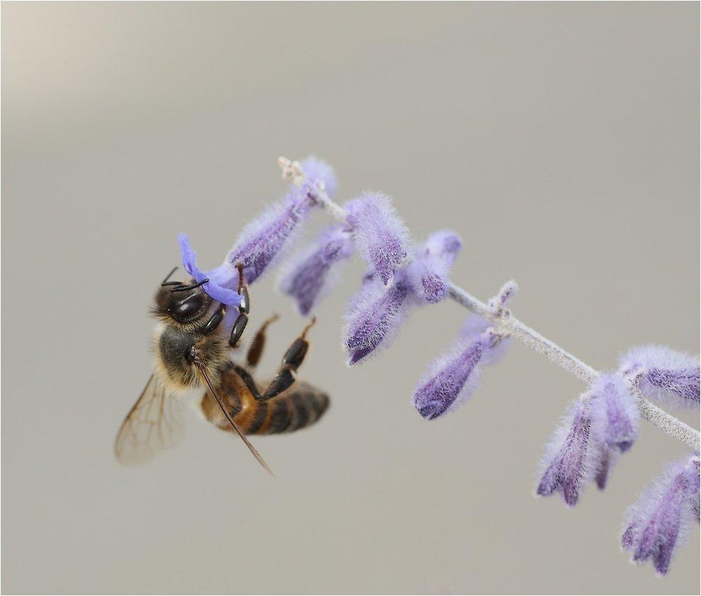 3 abeilles  190731092216504005