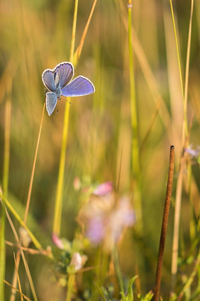 Du bleu dans les herbes 190803101648977865
