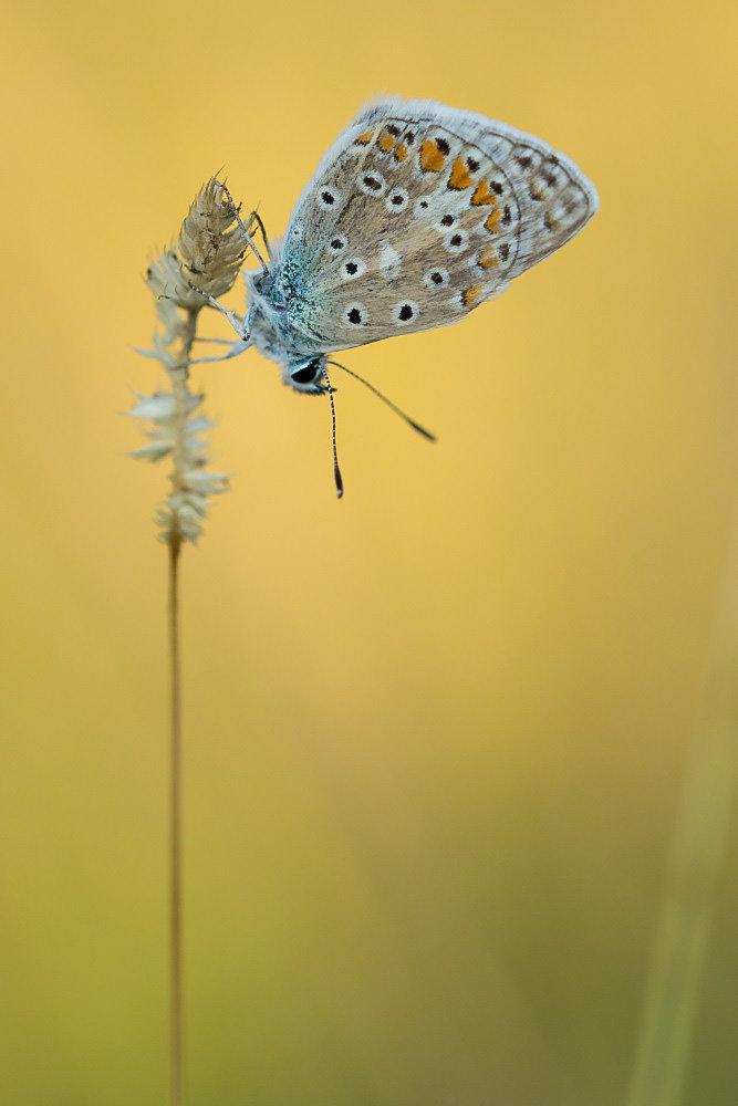 Du bleu dans les herbes 190803101728751340
