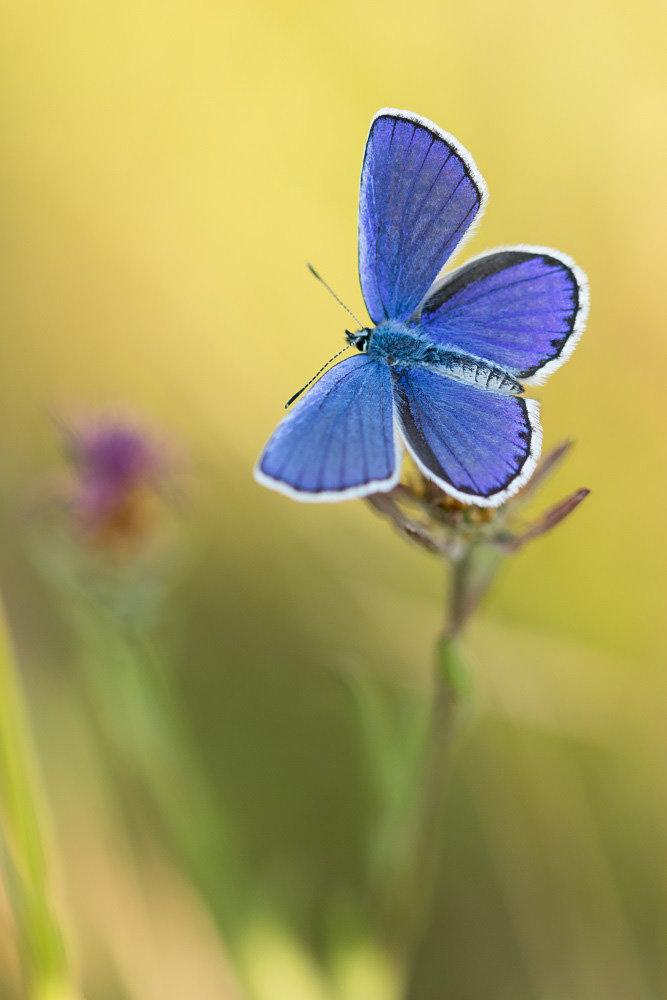 Du bleu dans les herbes 190803101856449415